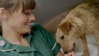 Responsive website for regional vet chain covering Wiltshire & Somerset